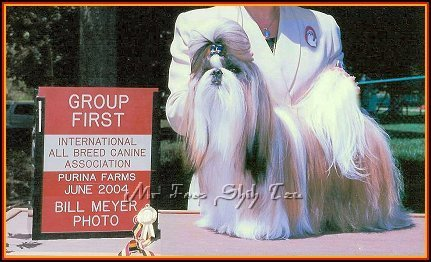 Image: Ch Tao Regency's American Idol, Dream came here to Mr. Foo's Shih tzu of Missouri & has been a wonderful addition to our family.  He has also sired many beautiful shih tzu puppies for us.