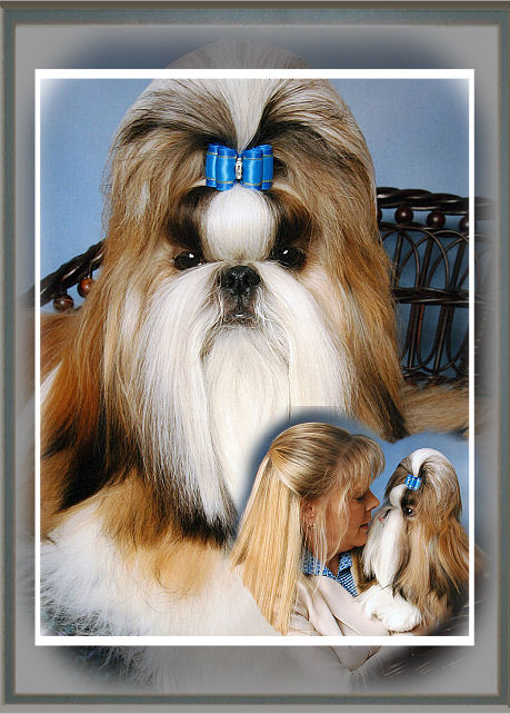 Mr. Foos Shih tzu of Indiana welcomes you to our website with our lovely Shih tzu Jack.  Please scroll down and feel free to take a look at our beautiful shih tzu & their puppies