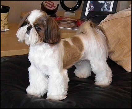 Excellent Dog Haircuts Styles  Harvardsolcom