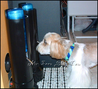 water bottle stands for pets The Pet Water Bottle Stand is the perfect solution for furbabies; both dogs and cats are able to drink water without getting a wet face, beard